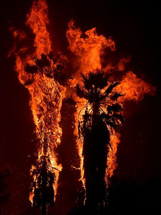 California blaze