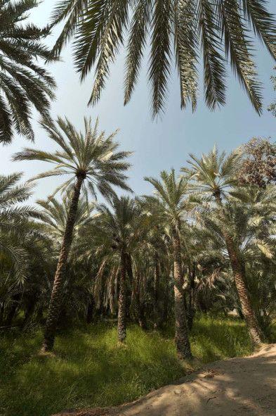 Al Ain Oasis-1570973488637