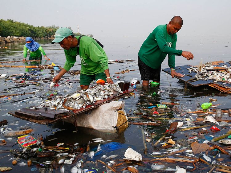 Philippines_Fish_Kill_24137