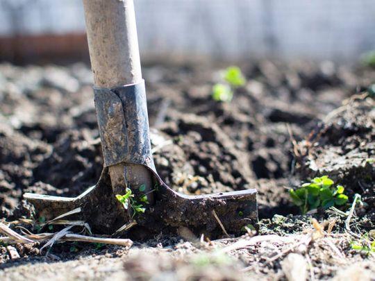 Shovel, grave
