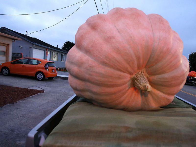 Pumpkin Weigh-Off