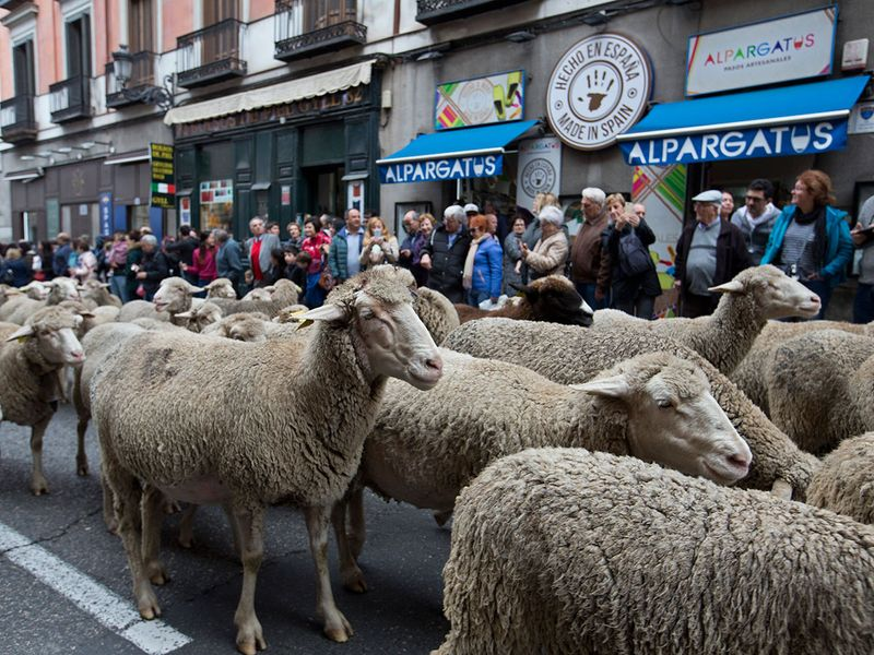 Copy-of-Spain_Sheep_Crossing_32326