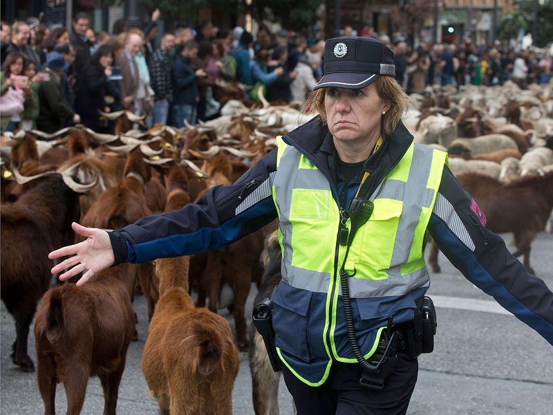 Copy-of-Spain_Sheep_Crossing_39074