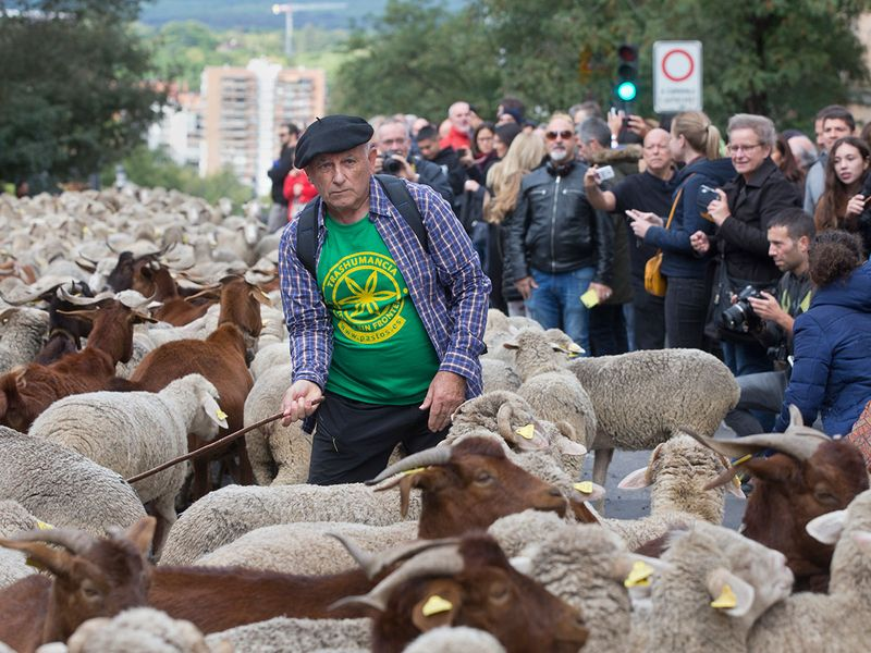 Copy-of-Spain_Sheep_Crossing_74364
