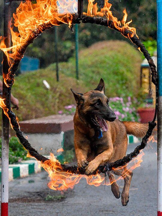 CRPF dogs gallery