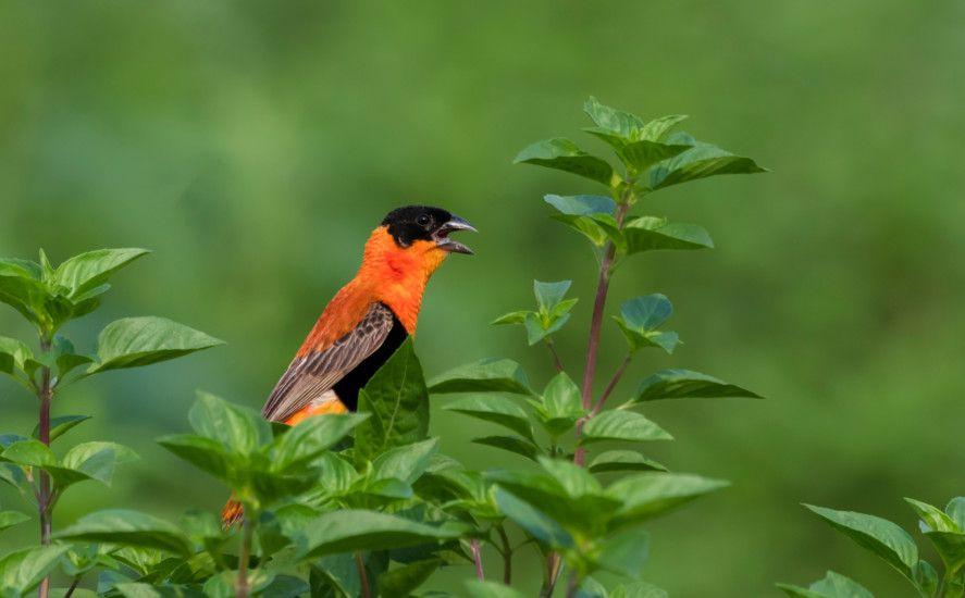 opn 191022 bird-1571741806996