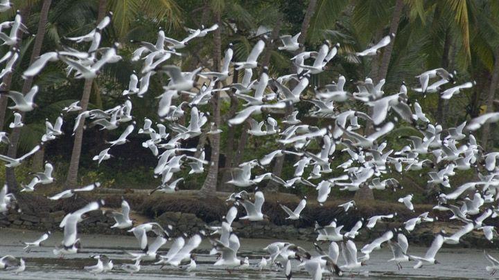 Kadalundi Bird Sanctuary