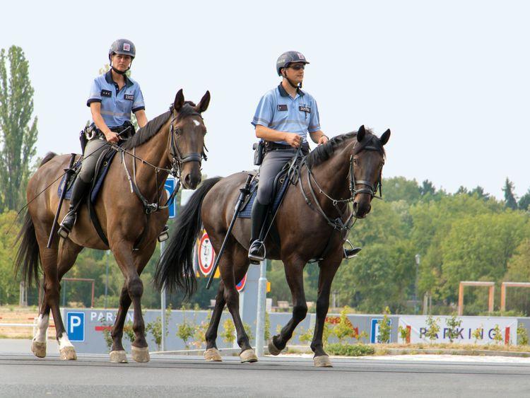 opn police horse-1571826457039