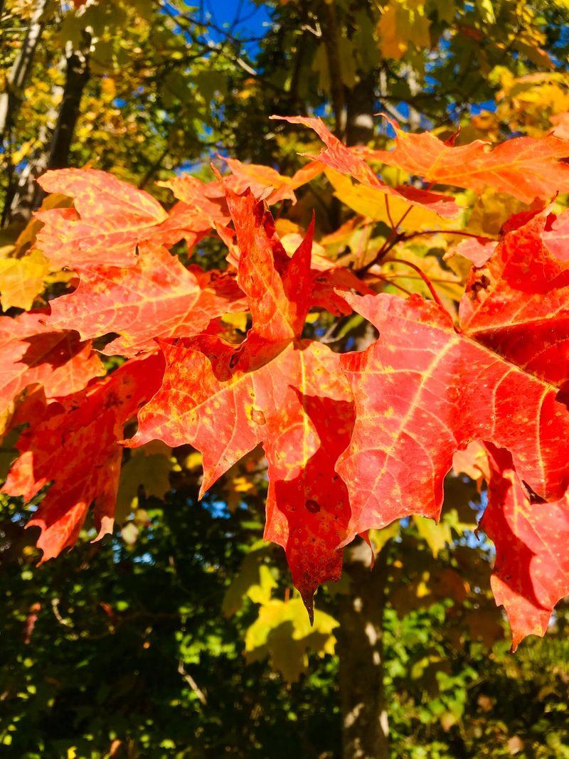 Autumn Canada Trees transform