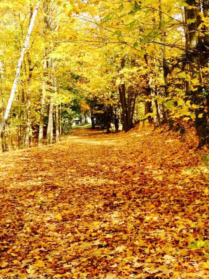 Autumn foliage canada