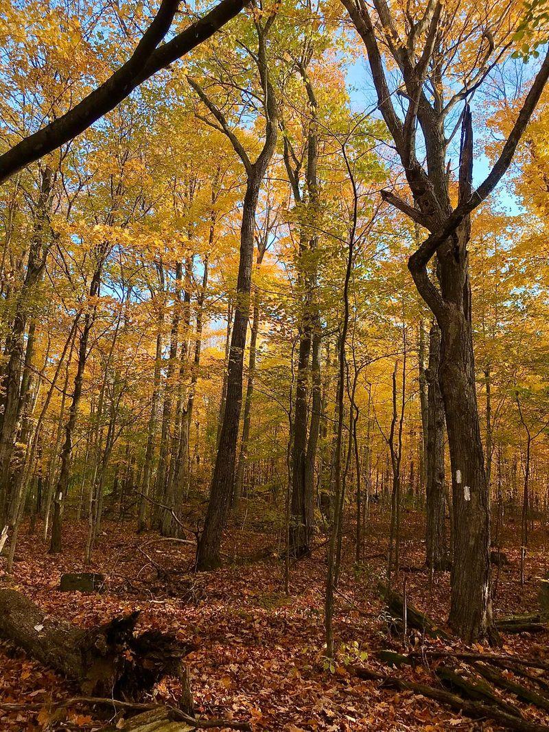 Autumn in Canada 009