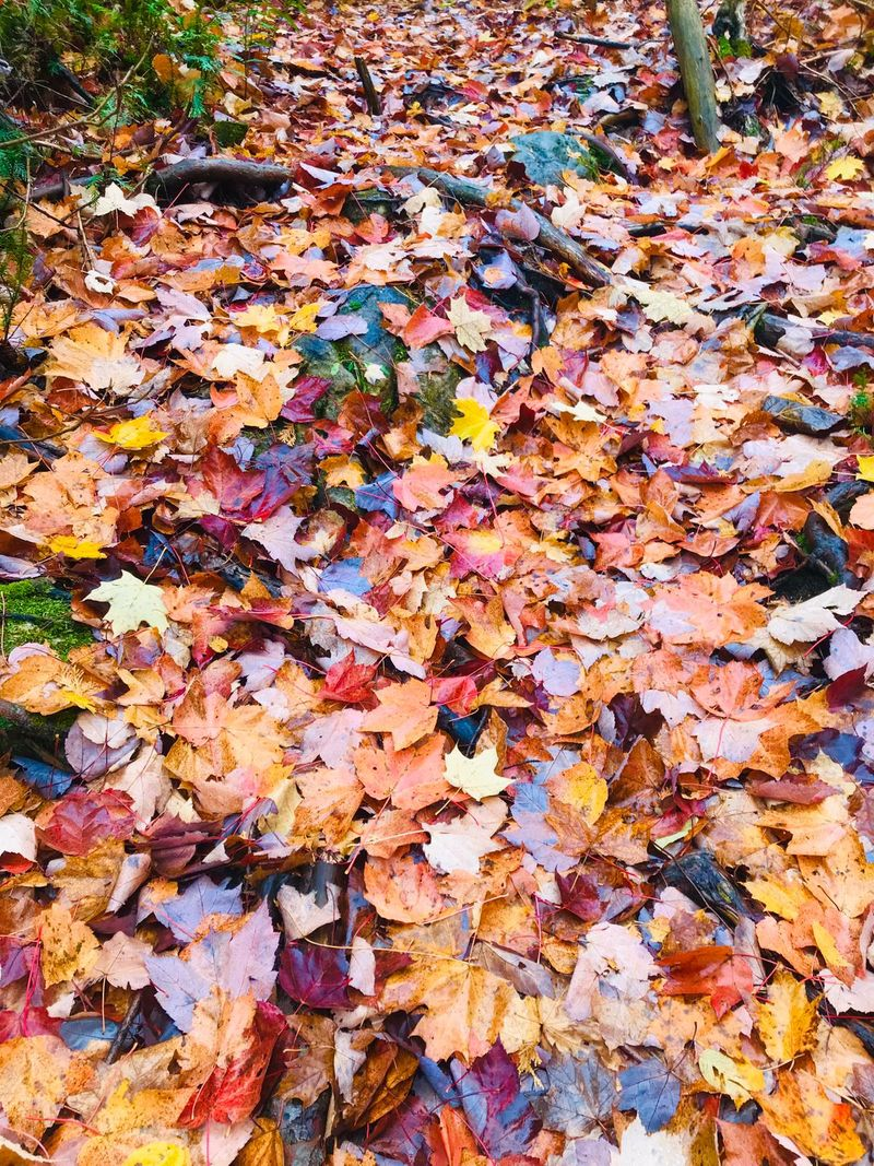 Autumn leaves: Intensity and pervasiveness of autumn colours on the ground.
