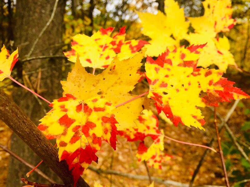 Autumn leaves 003