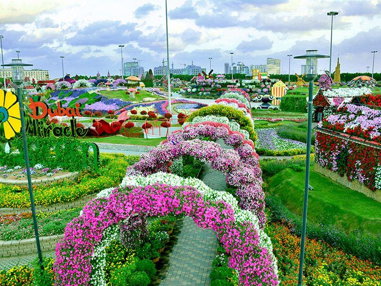 Dubai Miracle Garden Reopens On November 1 Uae Gulf News