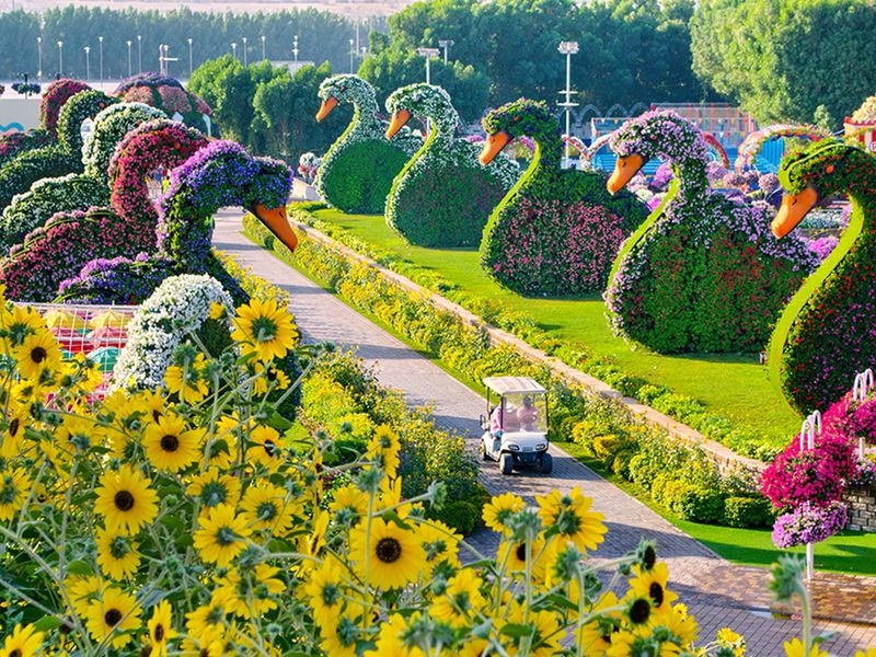 Dubai Miracle Garden Reopens On November 1 Uae Gulf News