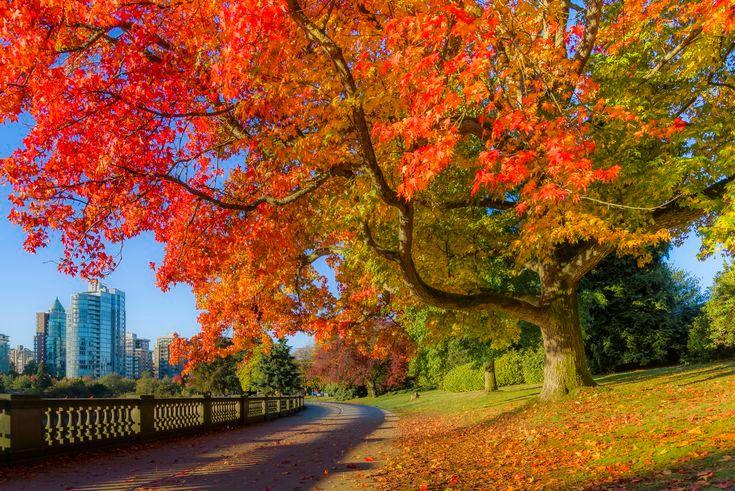 During autumn Canada trees 012121