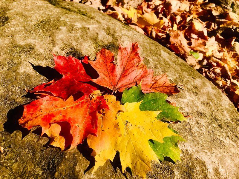Fall Canada 001