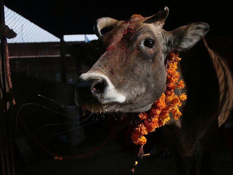 NEPAL-RELIGION-FESTIVAL
