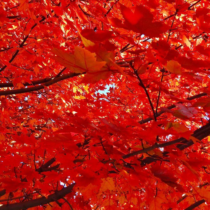 autumn leaves 0005