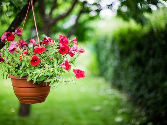 opn 191031 flower in a pot-1572519700959