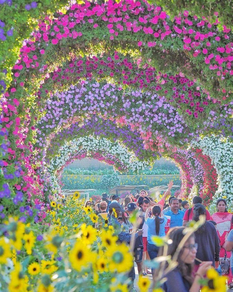 Dubai Miracle Garden - 01