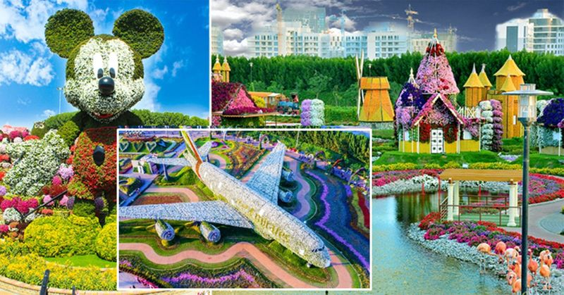 Dubai Miracle Garden Mickey mouse