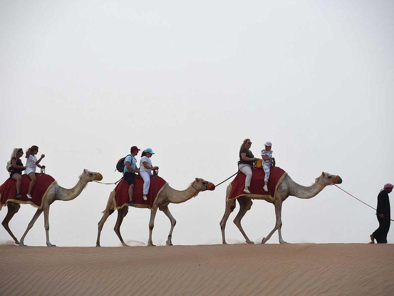 191105 camel