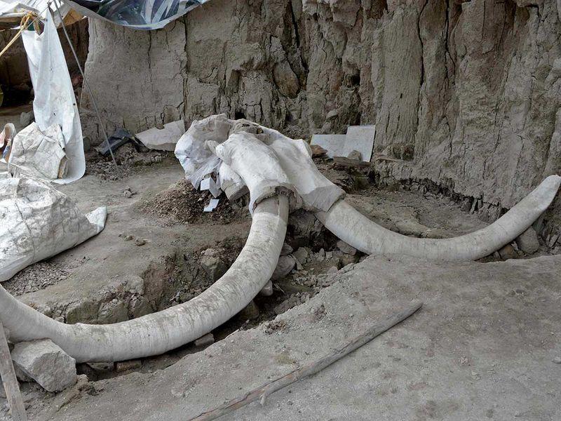 191107 mammoth 5