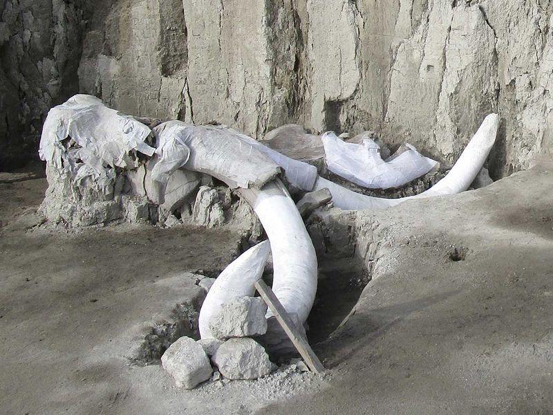191107 mammoth bones
