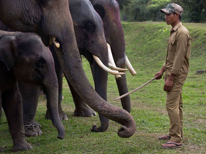 India_Wildlife_01966