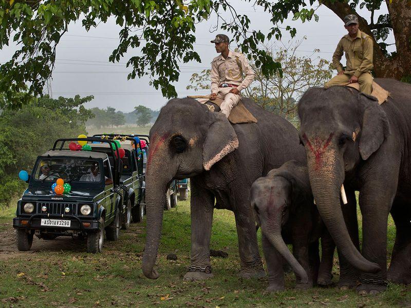 India_Wildlife_16321