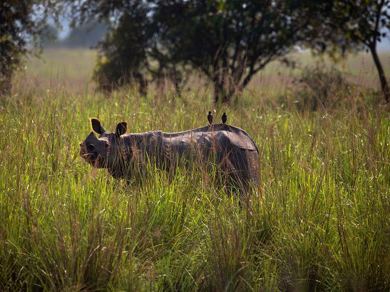 India_Wildlife_38715