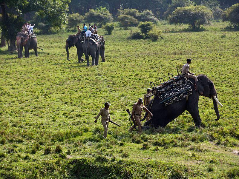 India_Wildlife_45064