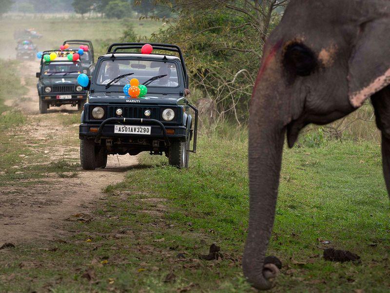 India_Wildlife_51117