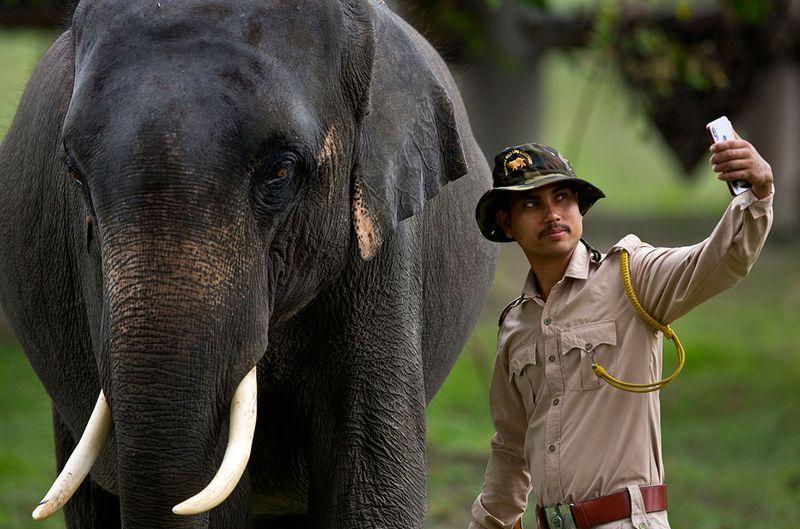 India_Wildlife_65096