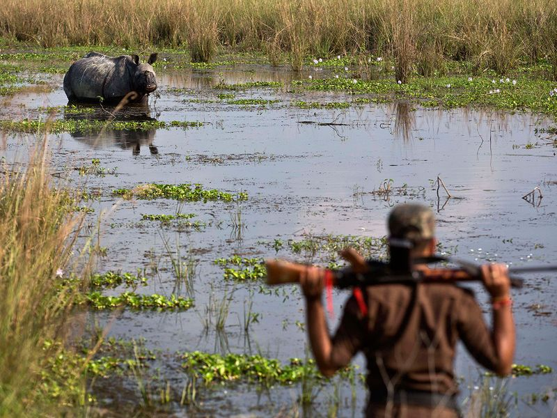 India_Wildlife_71930