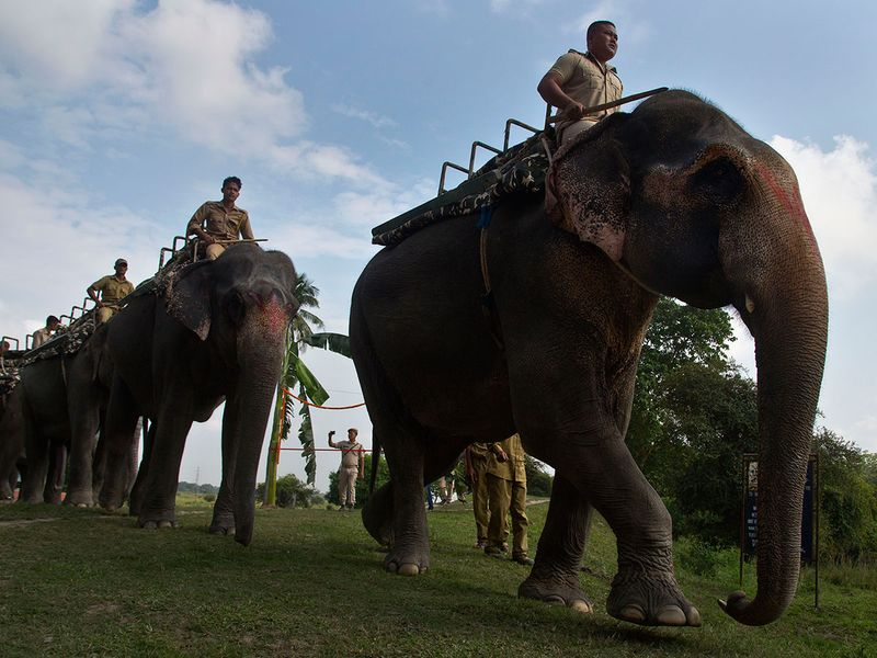 India_Wildlife_80232