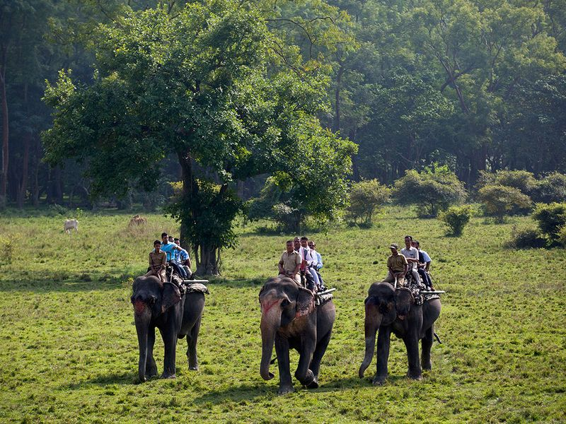 India_Wildlife_80954