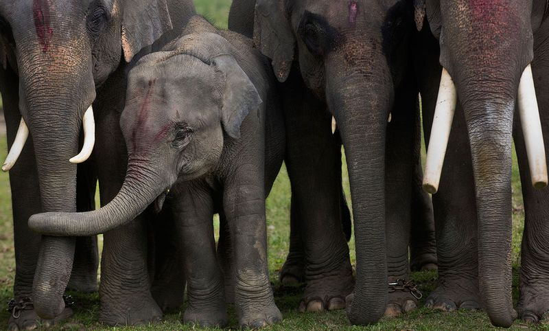 India_Wildlife_83453