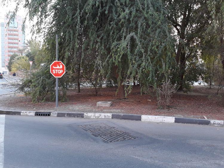 Tree hazard