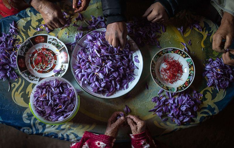 Morocco_Saffron_Photo_Gallery_06955