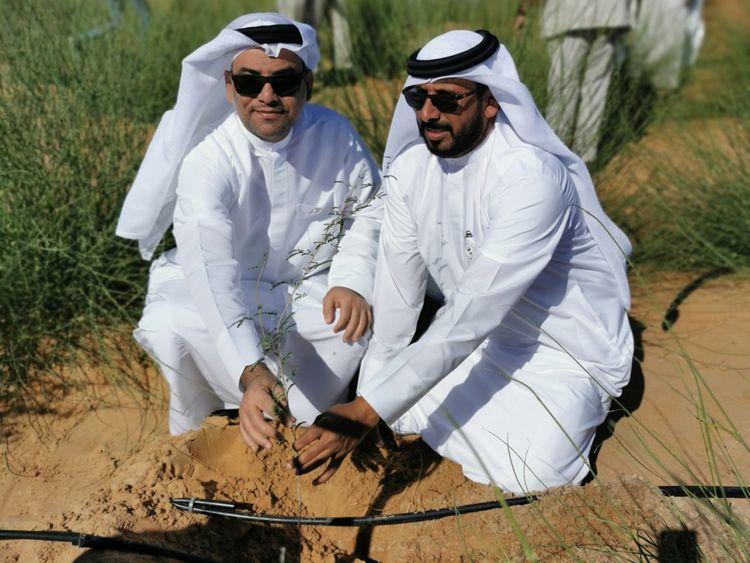 NAT 191113  EAD Partners Planting Ghaf 2-1573657192999