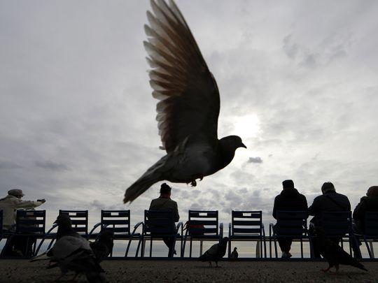 191114 pigeon