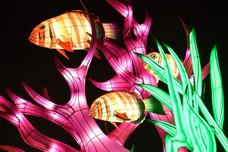 fish light structures