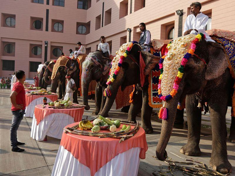 India_Elephants_10309