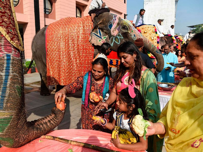 Members of Society for the Prevention of Cruelty to Animals (SPCA) and citizens offer fruits to decorated elephants