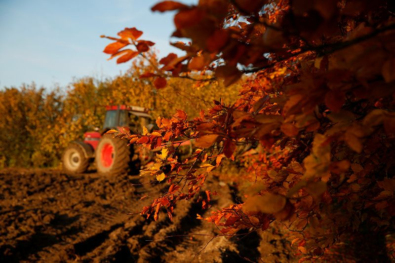 A French farmer plows his field during sunset as golden and rusty leaves colour the autumn in Escaudoeuvres, France.
