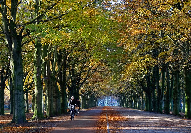A bicyclist passes as the sun highlights autumn colors in The Hague, Netherlands.