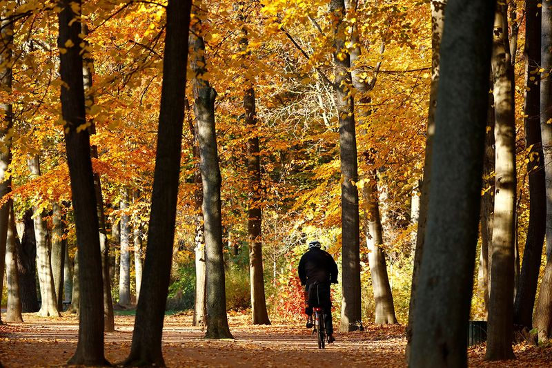 A cyclists passes autumnal trees at Tiergarten park in Berlin, Germany.
