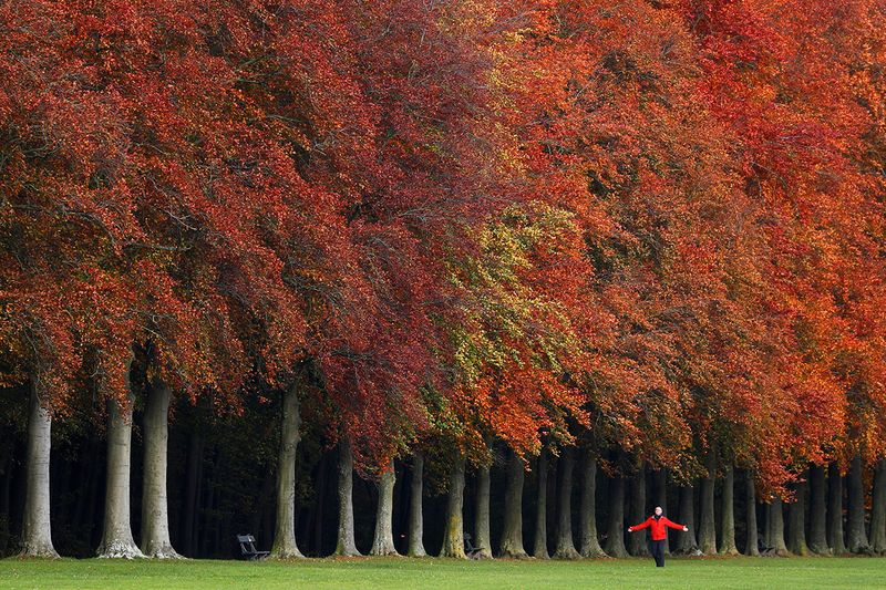 A man walks by trees with an autumn colour in a park in Tervuren, near Brussels, Belgium.